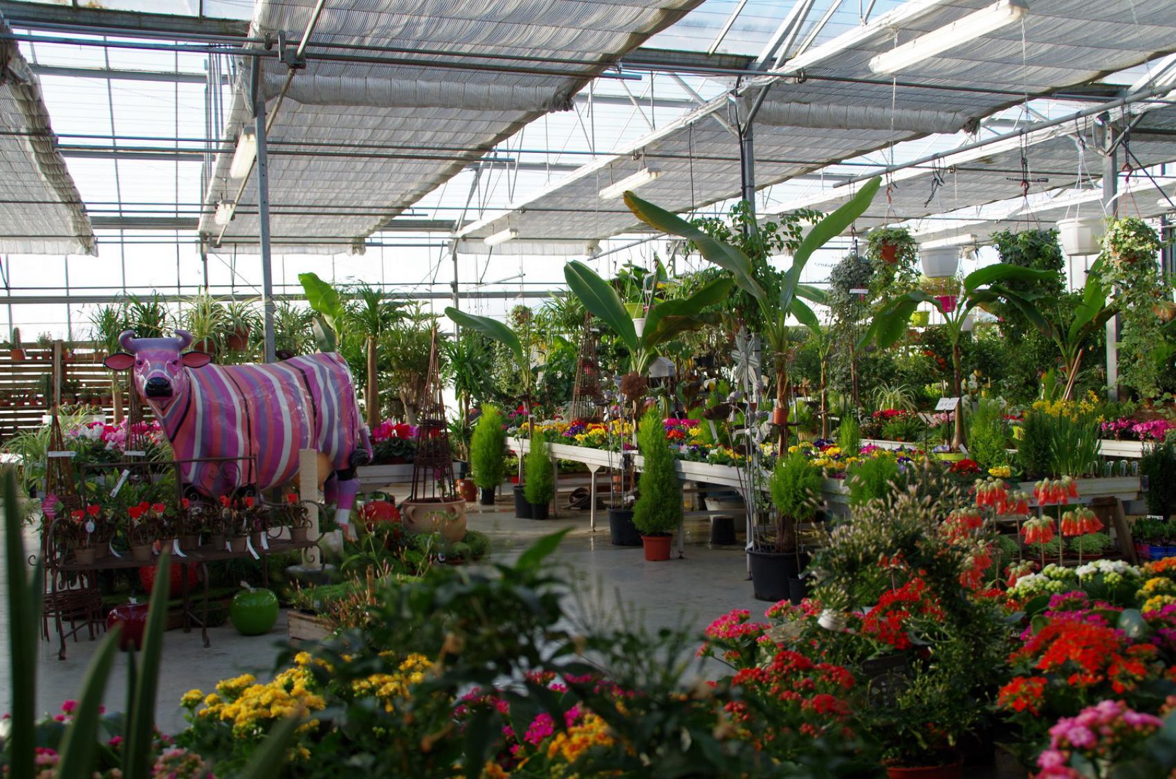 Petites Plantes Fleuries En Pot → plantes vertes et fleuries - pépinières rouberty proche
