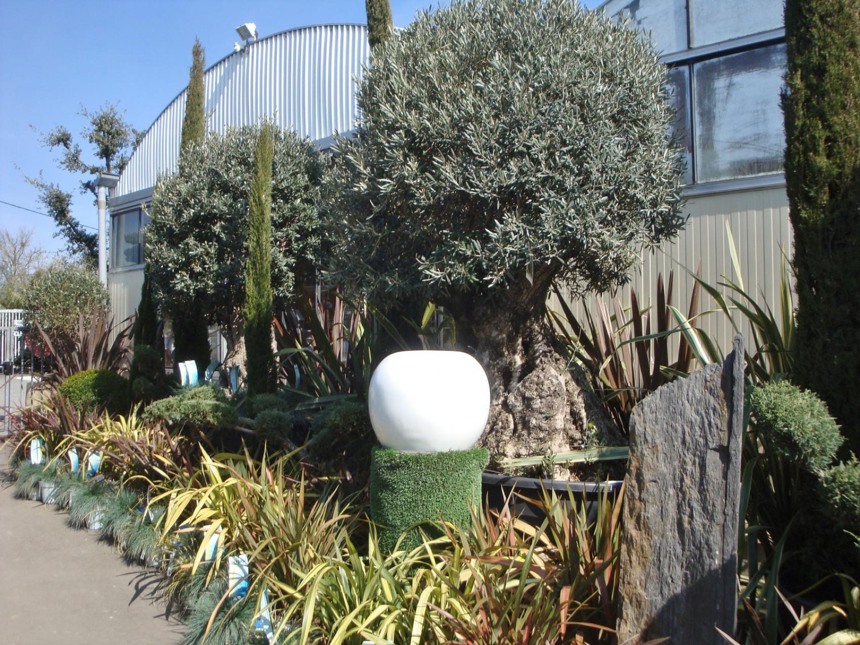 Oliviers p pini res rouberty proche la rochelle for Jardinerie des jardins